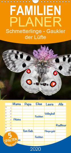 Schmetterlinge – Gaukler der Lüfte – Familienplaner hoch (Wandkalender 2020 , 21 cm x 45 cm, hoch) von Bachmeier,  Günter