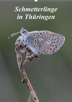 Schmetterlinge in Thüringen (Wandkalender 2021 DIN A2 hoch) von Sprenger,  Bernd