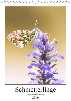 Schmetterlinge – Schönheiten der Wiesen (Wandkalender 2019 DIN A4 hoch) von Vomacka,  Andreas