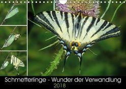 Schmetterlinge – Wunder der Verwandlung (Wandkalender 2018 DIN A4 quer) von Eisenreich,  Wilhelm