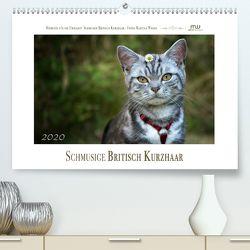 Schmusige Britisch Kurzhaar (Premium, hochwertiger DIN A2 Wandkalender 2020, Kunstdruck in Hochglanz) von Wrede,  Martina