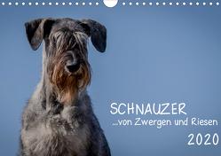 Schnauzer… von Zwergen und Riesen 2020 (Wandkalender 2020 DIN A4 quer) von Janz,  Michael