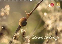 Schneckchen (Wandkalender 2018 DIN A3 quer) von Doberstein,  Judith