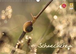 Schneckchen (Wandkalender 2019 DIN A3 quer)