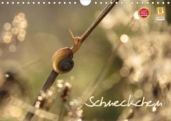 Schneckchen (Wandkalender 2021 DIN A4 quer) von Doberstein,  Judith