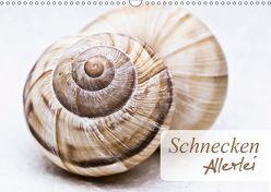 Schnecken Allerlei (Wandkalender 2019 DIN A3 quer)