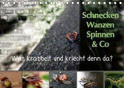 Schnecken, Wanzen, Spinnen und Co…Was krabbelt und kriecht denn da? (Tischkalender 2019 DIN A5 quer) von Brinker,  Sabine