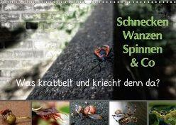 Schnecken, Wanzen, Spinnen und Co…Was krabbelt und kriecht denn da? (Wandkalender 2018 DIN A3 quer) von Brinker,  Sabine