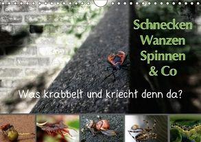 Schnecken, Wanzen, Spinnen und Co…Was krabbelt und kriecht denn da? (Wandkalender 2018 DIN A4 quer) von Brinker,  Sabine