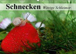 Schnecken. Witzige Schleimer (Wandkalender 2019 DIN A2 quer) von Stanzer,  Elisabeth