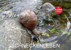 Schneckenleben (Wandkalender 2019 DIN A3 quer) von Schlüfter,  Elken