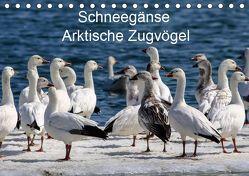 Schneegänse. Arktische Zugvögel (Tischkalender 2019 DIN A5 quer) von Hoville,  Wido