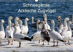Schneegänse. Arktische Zugvögel (Wandkalender 2019 DIN A3 quer) von Hoville,  Wido