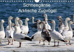 Schneegänse. Arktische Zugvögel (Wandkalender 2019 DIN A4 quer) von Hoville,  Wido