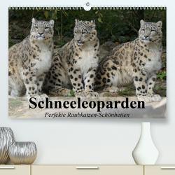 Schneeleoparden. Perfekte Raubkatzen-Schönheiten (Premium, hochwertiger DIN A2 Wandkalender 2021, Kunstdruck in Hochglanz) von Stanzer,  Elisabeth