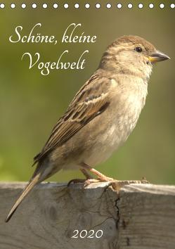 Schöne, kleine Vogelwelt (Tischkalender 2020 DIN A5 hoch) von Andreas Lederle,  Kevin