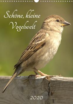 Schöne, kleine Vogelwelt (Wandkalender 2020 DIN A3 hoch) von Andreas Lederle,  Kevin