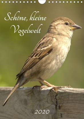 Schöne, kleine Vogelwelt (Wandkalender 2020 DIN A4 hoch) von Andreas Lederle,  Kevin