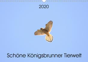 Schöne Königsbrunner Tierwelt (Wandkalender 2020 DIN A3 quer) von Andreas Lederle,  Kevin