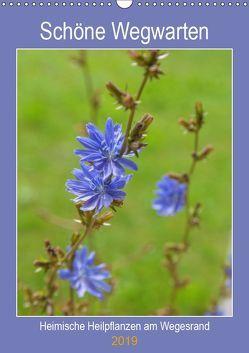 Schöne Wegwarten. Heimische Heilpflanzen am Wegesrand (Wandkalender 2019 DIN A3 hoch) von Wagner,  Hanna