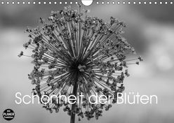 Schönheit der Blüten (Wandkalender 2019 DIN A4 quer) von Busch,  Martina