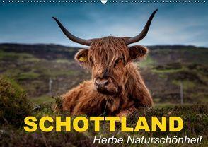 Schottland • Herbe Naturschönheit (Wandkalender 2016 DIN A2 quer) von Stanzer,  Elisabeth