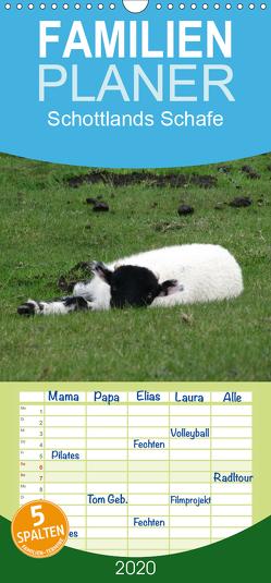 Schottlands Highland Schafe – Familienplaner hoch (Wandkalender 2020 , 21 cm x 45 cm, hoch) von ~bwd~