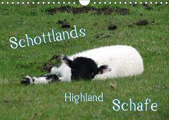 Schottlands Highland Schafe (Wandkalender 2019 DIN A4 quer)