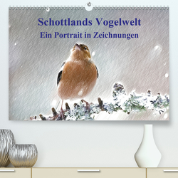 Schottlands Vogelwelt – Ein Porträt in Zeichnungen (Premium, hochwertiger DIN A2 Wandkalender 2020, Kunstdruck in Hochglanz) von Küster,  Friederike