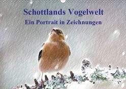 Schottlands Vogelwelt – Ein Porträt in Zeichnungen (Wandkalender 2019 DIN A3 quer) von Küster,  Friederike