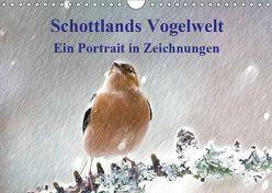 Schottlands Vogelwelt – Ein Porträt in Zeichnungen (Wandkalender 2019 DIN A4 quer) von Küster,  Friederike