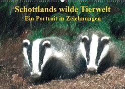 Schottlands wilde Tierwelt – Ein Porträt in Zeichnungen (Wandkalender 2019 DIN A2 quer) von Küster,  Friederike