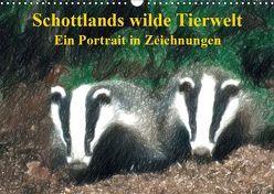 Schottlands wilde Tierwelt – Ein Porträt in Zeichnungen (Wandkalender 2019 DIN A3 quer) von Küster,  Friederike