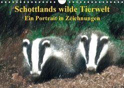 Schottlands wilde Tierwelt – Ein Porträt in Zeichnungen (Wandkalender 2019 DIN A4 quer) von Küster,  Friederike