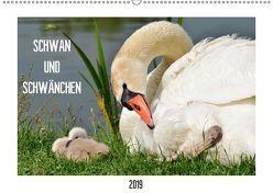 SCHWAN UND SCHWÄNCHEN (Wandkalender 2019 DIN A2 quer) von Gaudig,  Marlise