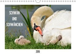 SCHWAN UND SCHWÄNCHEN (Wandkalender 2019 DIN A4 quer) von Gaudig,  Marlise