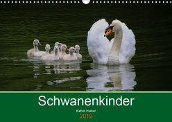 Schwanenkinder (Wandkalender 2019 DIN A3 quer) von Hueber,  Kathrin
