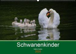 Schwanenkinder (Wandkalender 2020 DIN A2 quer) von Hueber,  Kathrin