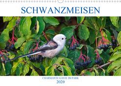 Schwanzmeisen (Wandkalender 2020 DIN A3 quer) von Jäger,  Anette