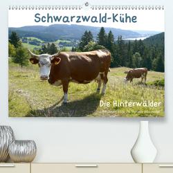 Schwarzwald-Kühe – Die Hinterwälder (Premium, hochwertiger DIN A2 Wandkalender 2020, Kunstdruck in Hochglanz) von Biothemen, Goldscheider,  Stefanie