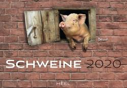 Schweine 2020