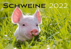 Schweine 2022