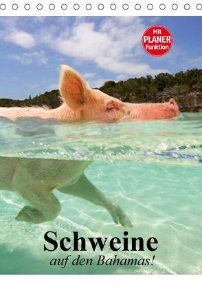 Schweine auf den Bahamas! (Tischkalender 2018 DIN A5 hoch) von Stanzer,  Elisabeth