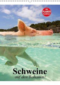 Schweine auf den Bahamas! (Wandkalender 2018 DIN A3 hoch) von Stanzer,  Elisabeth