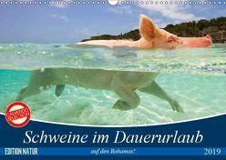 Schweine im Dauerurlaub auf den Bahamas! (Wandkalender 2019 DIN A3 quer) von Stanzer,  Elisabeth