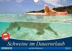 Schweine im Dauerurlaub auf den Bahamas! (Wandkalender 2019 DIN A4 quer) von Stanzer,  Elisabeth