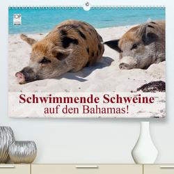 Schwimmende Schweine auf den Bahamas! (Premium, hochwertiger DIN A2 Wandkalender 2021, Kunstdruck in Hochglanz) von Stanzer,  Elisabeth
