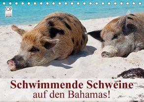 Schwimmende Schweine auf den Bahamas! (Tischkalender 2018 DIN A5 quer) von Stanzer,  Elisabeth