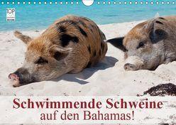 Schwimmende Schweine auf den Bahamas! (Wandkalender 2019 DIN A4 quer) von Stanzer,  Elisabeth