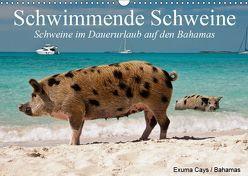 Schwimmende Schweine (Wandkalender 2019 DIN A3 quer) von Stanzer,  Elisabeth